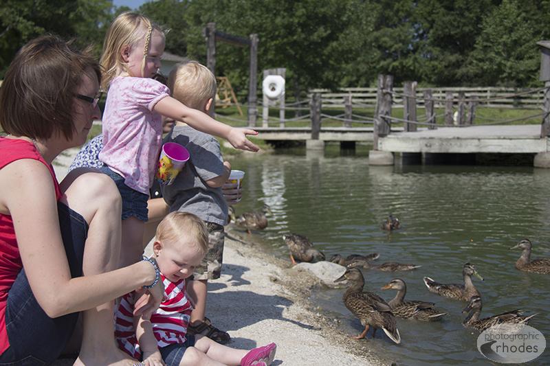 Feeding the ducks was quite a hit.